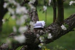 Lesen im Garten lizenzfreie stockfotografie