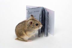 Lesen Sie den Hamster Lizenzfreies Stockbild