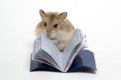 Lesen Sie den Hamster lizenzfreie stockfotografie