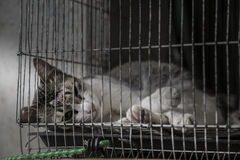 Lesion on cat head sick and lonely in old cage, low and very bad Stock Images