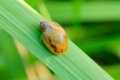 Lesma pequena na grama - close up fotografia de stock