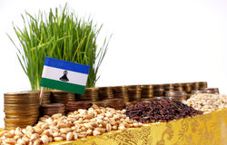 Lesotho flag waving with stack of money coins and piles of wheat Royalty Free Stock Photo