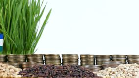 Lesotho flag waving with stack of money coins and piles of wheat. And rice seeds stock video