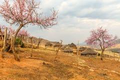 Lesotho koja, Afrika Royaltyfri Bild