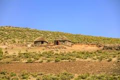 Lesotho koja, Afrika Arkivfoton