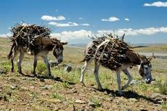 Lesotho-Straßen Letseng Lizenzfreie Stockfotografie