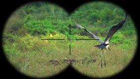 Lesser adjutant stork bird leptoptilos javanicus seen through binoculars. Bird watching at wildlife safari. Shot with a Sony RX10 IV fps 59,94 FHD stock video footage