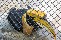 Lesser adjutant stork in the zoo Stock Photography