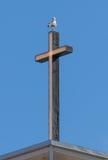 Lesser Black-backed Gull (Larus fuscus) standing on a Christian Stock Image