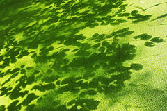 Lesser duckweed and shadows of leaves Royalty Free Stock Photography