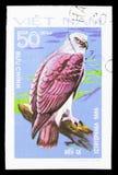 Lesser Fish Eagle (Icthyophaga Nana), Greifvögel serie, circa 1982 lizenzfreies stockfoto