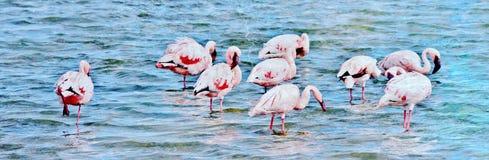 Lesser Flamingos feeding Stock Photo