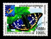 Lesser Purple Emperor (ilia), borboleta do Apatura - Belgica, Bruss Imagens de Stock Royalty Free