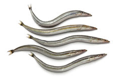 Lesser sand eels. On white background Royalty Free Stock Photos