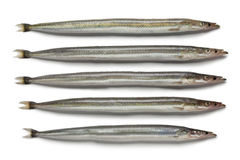 Lesser sand eels Stock Photo
