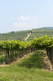 Lessinia (Veneto, italy), vineyards near Soave Royalty Free Stock Photography