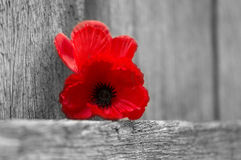 Lest We Forget. ANZAC Remembrance Stock Photo