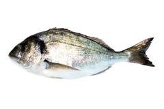 Leszcz denna Ryba zdjęcia stock