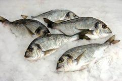 leszcz ryba Obraz Royalty Free