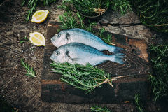 Leszcz ryba Zdjęcie Royalty Free