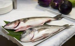 leszcza kulinarnego gilthead przygotowany seabass fotografia stock