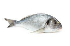 leszcza morze rybi pozłacany kierowniczy zdjęcia stock