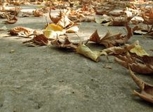 Let Go. Dry, fallen, and yellow leaves dispersed on the ground, with copy space Royalty Free Stock Photos