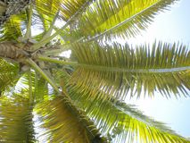 Let hierboven op uw hoofd - kokosnoten royalty-vrije stock fotografie