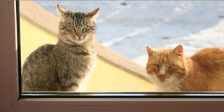 Let me in. Cats in window Royalty Free Stock Image