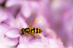 Let me bee Royalty Free Stock Image