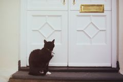 Let me in. Cat waiting for its owner to let him in Stock Photography