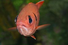 Let Me Out. Fish in an aquarium fish tank Royalty Free Stock Photos