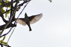 Let me spread my wings... Royalty Free Stock Image