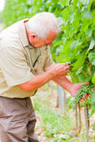 Let's check our grapevines Stock Images