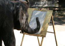 Let's Draw Big Fella!. A big elephant from thailand showing his drawing skills Stock Image