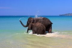 Let's go swimm!. Sisters baby elephants going to swimm at ocean stock photography