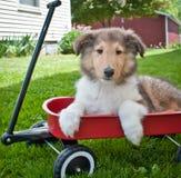 Let's Go For a Walk... Stock Photos