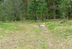 Let's go for a walk with dog at wildlife nature Royalty Free Stock Photos