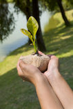 Let's grow them. A concept of preserving our environment by plant more tree seed. Using tree's seed that used for reforestation in my country.  A river side in Stock Images