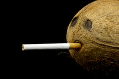 Let's smoke. Close view at coconut head with cigarette Royalty Free Stock Image
