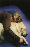 Let Sleeping Dogs Cuddle. Original photo of a girl cuddled up next to a golden retriever dog stock photos