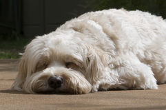 Let sleeping dogs lay Stock Photo