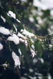 Let it snow. First snowfall of the season stock photography