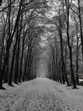 Let is snow. Snow jn holland woods royalty free stock image