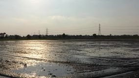 Let the water into the field to prepare. The rice area stock video