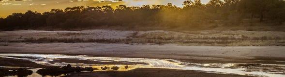 Letaba, centre de parc national de Kruger, Afrique du Sud image stock