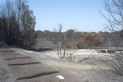 Disastrous effects of an arson and of Its dousing in a forest. Letal effects of an fire and of Its dusing with water bombers in a forest near Rome Stock Image