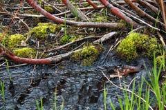 Letame, fango, primavera di Moss At The Marsh In fotografia stock libera da diritti