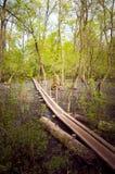Letea森林,图尔恰县,罗马尼亚 图库摄影