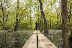 老Letea森林,罗马尼亚 免版税库存图片